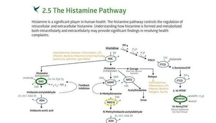 Diagram of the histamine pathway on the stategene report generated by seeking health